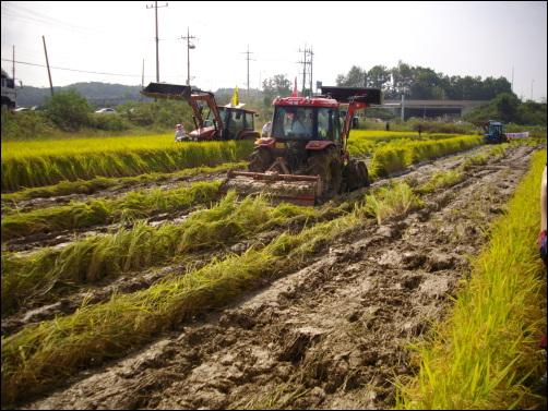 논 갈아엎는 트랙터 29일 오전 여주농민회 회원들이 쌀값폭락에 항의하며 트랙터를 이용해 논을 갈아엎고 있다.