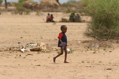가축의 시신 옆을 걸어가는 어린이.  목축을 생계수단으로 살아가던 많은 사람들이 기근으로 가축을 잃고 시름에 빠져 있다.