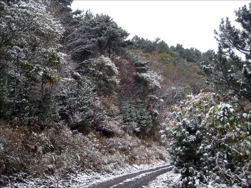 설경 거제도에 많은 눈이 내린것은 아니지만 그래도 아름다운 풍경이다.