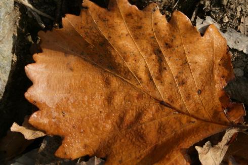 마른 낙엽에 맺혀있는 아침이슬 가을 햇살에 조금씩 마르고 있었다.