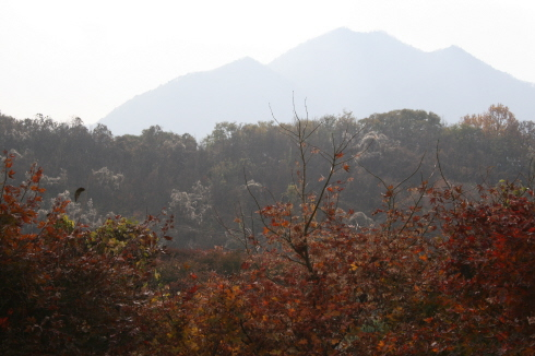 고개 돌려 올려다 본 산마루 밑에 서있는 나무들 마치 서릿발이라도 내린 것처럼 희부연 것들을 덮어쓰고 있다.