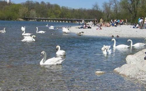 독일 이자강 살리기  맑은 물이 흐르고, 모래섬이 있고, 새와 사람이 어울린 강 살리기가 이뤄진 독일 이자강입니다. 지금부터 진짜 강살리기가 무엇인지 살펴보겠습니다. (오늘의 기사를 위해 독일에 계신 임혜지 박사님이 사진을 보내주셨습니다. )