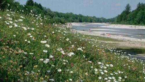 여울과 모래섬과 꽃밭으로 되살아난 이자강  뮌헨 시청 홈페이지에 이자강 복원을 홍보하는 첫 사진입니다.