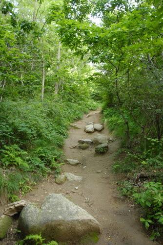 분산성으로 오르는 길 분산성 주차장에서 분산성으로 오르는 길은 그렇게 어렵지 않다. 가벼운 마음으로 산책하듯이 걸어가면 된다