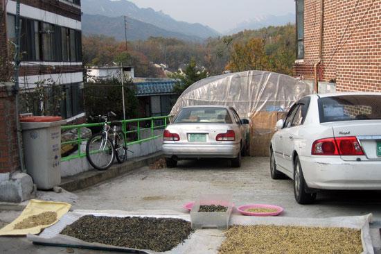 유재철 할아버지네 주차장 흐리다가 볕이 들자마자 할아버지가 콩이며 깨를 말렸습니다.