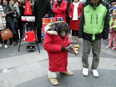 구세군 모금활동 침팬지가 퍼포먼스를 하고 있다.