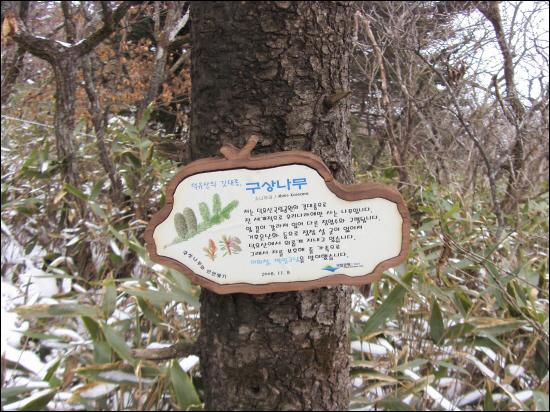 국립공원관리공단에서는 덕유산의 오래된 구상나무와 주목을 가족인연을 맺어 보호하고 아끼는 일을 하고 있다. 인연을 맺은 당사자만이 아니라 전 국민이 아끼고 보살펴야 할 우리의 소중한 생물자원이다.