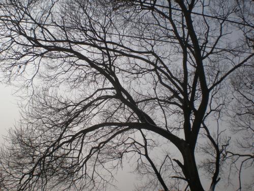 우리 동네 '앞 들'에 서있는 나무 고향은 내 마음이 정을 주어 정착한 곳이다.