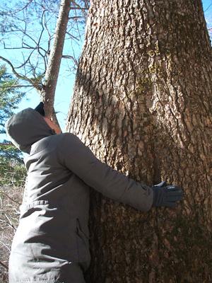 나무의 크기 보이는 것처럼 엄청 크다. 비교할 수 있도록 끌어 안아 봤다.