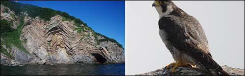 고군산열도 광대도(무인도). 절벽이 국내 섬에서 보기드문 형태로 지질학적으로 매우 가치가 높은 것으로 조사됐다(왼쪽)/제주도 한 무인도에서 집단으로 서식 중인 것으로 확인 천연기념물 바다제비(오른쪽)