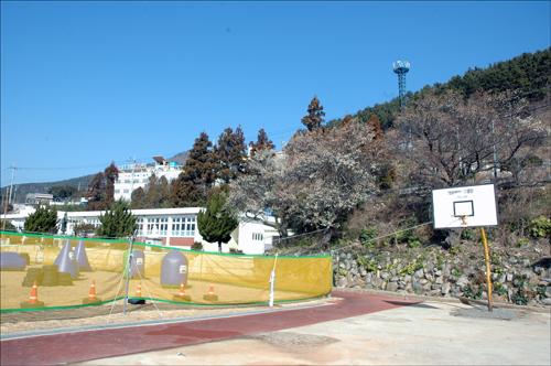 구. 구조라초등학교 구.구조라초등학교에서 수령 약 40년 된 매화나무 세그루에 매화가 활짝 피었다.