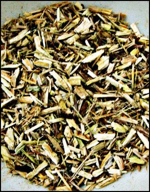 약국에서 구매한 말린 버드나무 껍질 차 잘 우러난 차는 진한 밤색을 띤다.