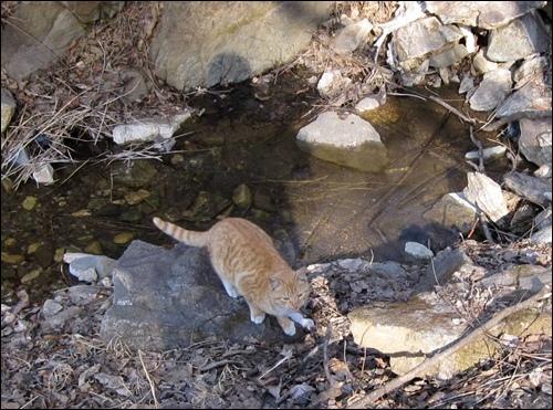 개울에 내려가 물 한모금 마시고 다시 올라오는 고양이