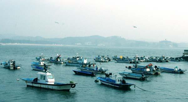 죽도 앞바다 어선들 죽도 선창가에 정박 중인 어선들과 멀리 바라다 보이는 용두해변