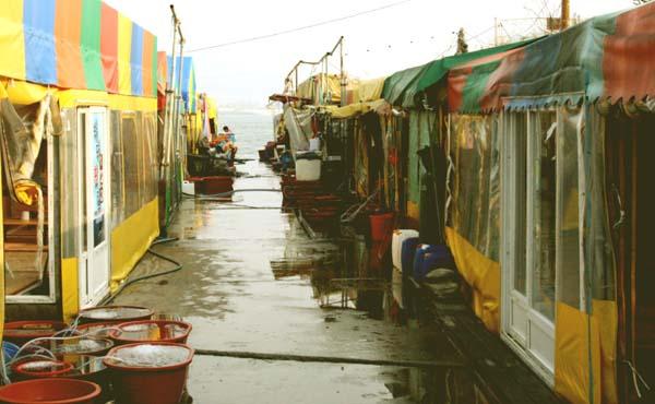 포장마차촌 선착장을 끼고 왼쪽 길로 가면 싱싱한 회를 파는 포장마차촌이 바닷가에 두 열로 단장돼 있다.
