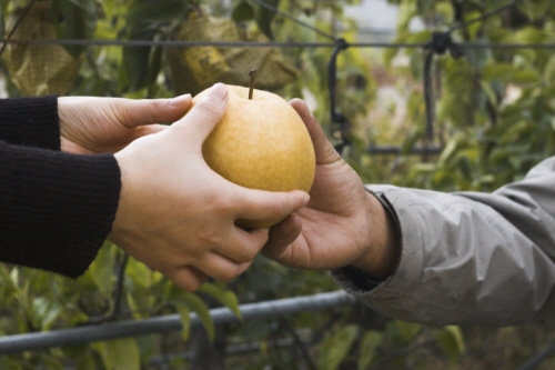 소비자와 농부 소비자와 농부가 서로의 마음을 이해하고 도와야 농부는 안전한 농산물을 생산하고 소비자는 안심하고 먹을 수 있다.