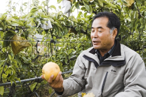 유기농배 생산자 서울대 가기 보다 어려운 유기농배를 생산하는 김광식 농부