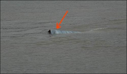 어디에 있던 물건인고?  강물 속에 떠 내려왔있는 이 녀석은 어디에 있던 물건인고? 이포보 가교에 있던 것이라 하옵니다. 왜 이게 여기에 떠 내려왔는고? 다 부실 공사 덕이라고합니다.