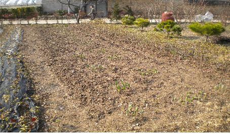새싹  비상하는 새처럼 흙을 뚫고 나온 새싹은 경이롭다.
