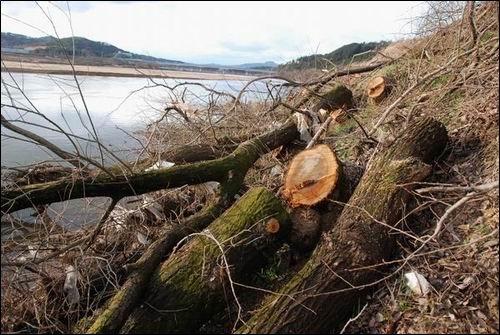 왜 이 나무들이 잘려야했을까요?  멀리 경천교가 보입니다. 이제 그 아름답던 낙동강은 더 이상 찾기 어려워질듯합니다.
