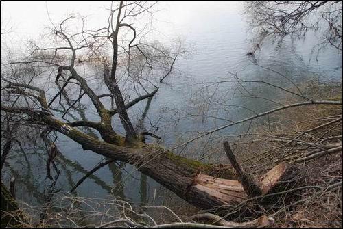 낙동강에 드리워진 죽음의 그림자 강물에 누워버린 버드나무처럼, 지금 낙동강은 무분별한 준설과 보공사로 죽음의 위기에 처했습니다.