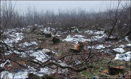 줄줄이 잘려나간 사과나무... 지난 가을에도 풍선한 열매를 맺던 사과나무였는데...이곳서 생산된 사과를 전국민이 맛있게 먹었겠지요. 4대강사업은 국민의 먹거리를 위협하는 잘못입니다.