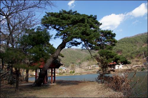 환산정 앞의 소나무 200년 된 보호수이다