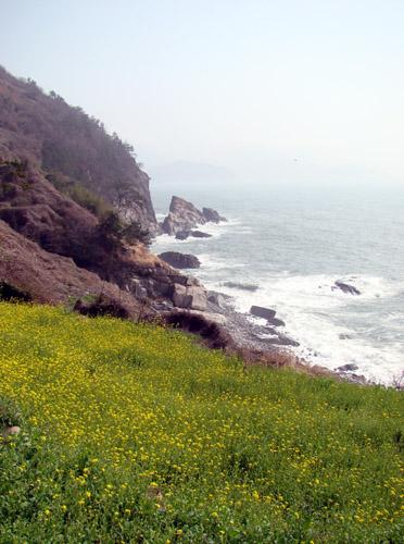 유채와 해안 풍경.