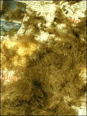 자르고 난 머리카락 신문지에 잘 모았다가 퇴비 만드는데 보태준다. 염색도 파마도 하지 않은 자연 그대로의 머리카락 역시 시간이 지나면 흙으로 돌아가게 될 것이다.