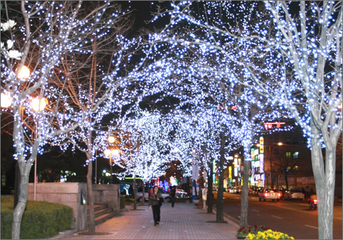 이팝나무 가지에는 크리스마스트리용 전구가 설치되어 밤거리를 비추고 있다. 유성구는 '눈꽃축제' 분위기 조성을 위해 설치했다고 하지만, 축제가 빨라 피지 않는 이팝꽃을 피우게 하기 위한 고육지책이라는 지적이 일고 있다.