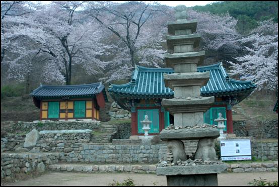 대원사 벚꽃에 쌓인 대원사 대웅전과 적묵당. 오층석탑 오른편에 문화재 안내판이 보인다.