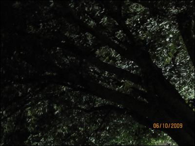 누워서 올려다 본 밤의 느티나무 밤샘 농성하며 대자유인, 운수납자를 생각하다