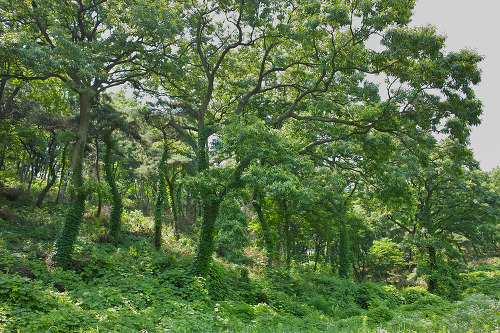 우거진 숲 정말 만수동이란 이름에 걸맞게 아직도 나무들이 엄청 우거져 있다. 이 집을 지나 안쪽으로 쭉 걸어 들어가도 멋진 숲을 만날 수 있다.