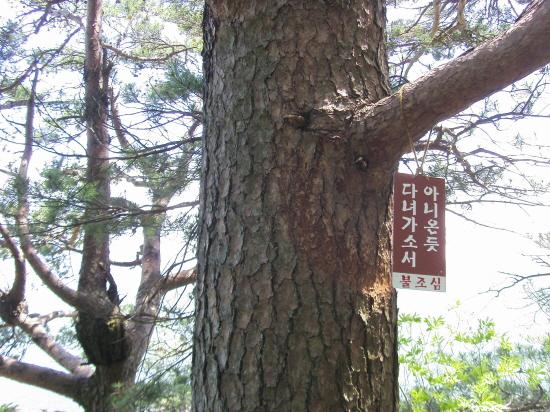 삼정산 길은 알려지지 않은 아름다운 숲길입니다.  조용히 다녀 가십시오.