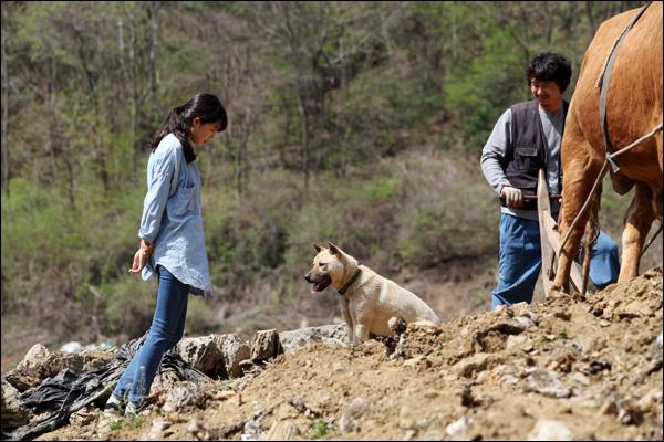 영화 <소와 함께 여행하는 법> 촬영 중인 공효진과 누랭이 누랭이는 함께 사는 소가 영화에 출연하면서 같이 영화에 출연하게 되었다.