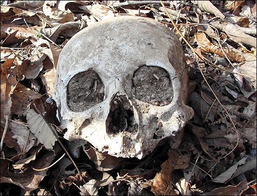 대전 산내 골령골에 당시 희생자 유해로 보이는 두개골이 나뒹굴고 있다.