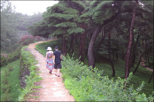 허리가 휜 고창읍성의 소나무숲. 색다른 운치를 자아냈다.
