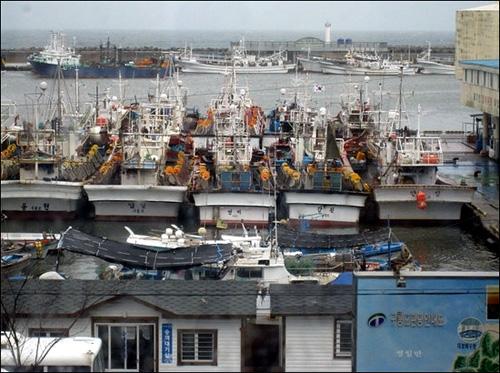 7일 오후 구룡포 모습. 태풍 '말로'가 강풍을 동반한 비를 뿌리는 가운데 어선들이 포구에 정박해 있다.