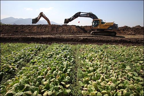 16일 오후 부산광역시 사상구 낙동강 하구 삼락둔치에서 '4대강 사업'이 본격적으로 진행될 예정인 가운데, 농민들이 수확을 포기한 채소밭 부근에서 굴삭기가 땅을 파헤치고 있다.
