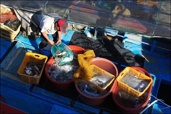소래포구 선착장. 꽃게를 부두 위로 올리는 작업을 하는 어부.