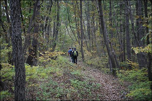 장안산 장안산은 처음부터 끝까지 낙엽길이다.