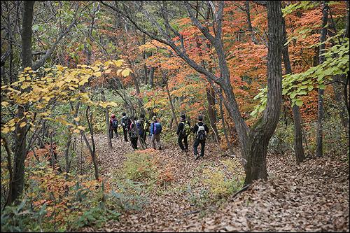 장안산 살면서 가장 긴 낙엽 길을 걸었다.
