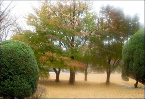김대중 대통령 묘역으로 가는 길목의 단풍 숲. 잠시 쉬어가고 싶도록 단풍이 곱고 아름답더군요.