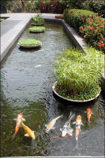 정수장 연못 잉어 뉴워터 비지터센터 주변 연못에는 대형 잉어들이 헤엄처 다니고 있다.