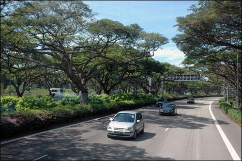 고속도로 싱가포르 고속도로 주변에는 밀림에서나 볼 수 있는 큰 나무들이 숲을 이루고 있는듯 하다.