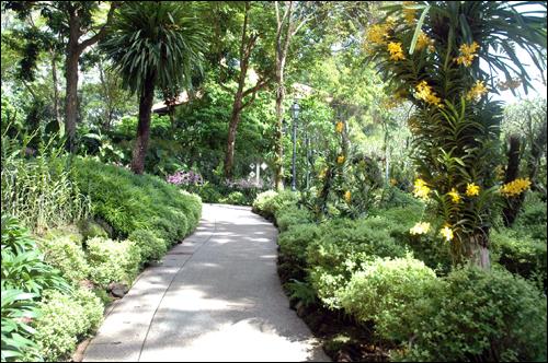 난초공원 이 공원에는 수 많은 난이 화려한 색깔로 사람들을 유혹하고 있다.