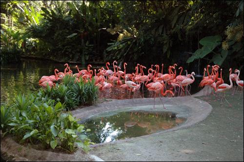 홍학 날씬하게 빠진 다리, 가늘고 긴 목, 분홍색 깃털을 가진 홍학떼. 아름다운 자태가 그지없다.