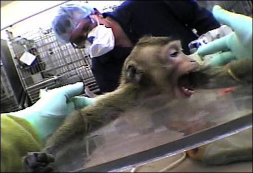 영장류의 동물실험은 감각력있는 동물을 이용한다는 점에서 많은 도덕적 논쟁을 불러일으킨다.