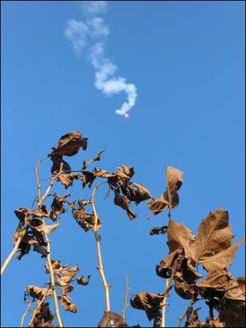 축포 푸른 하늘을 뒤로한 마른 낙엽 위로 서바이벌 경기를 축하하는 축포가 떨어져 내리고 있다.