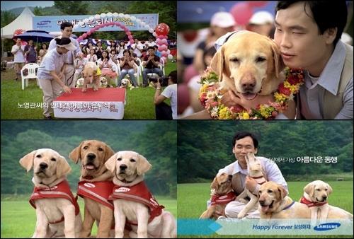 2008년 삼성안내견학교를 소재로 제작된 삼성화재 TV광고